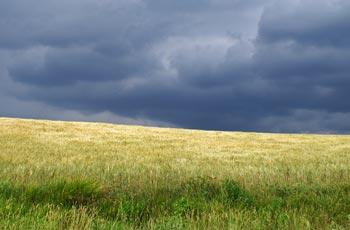 graanveld in Umbrie