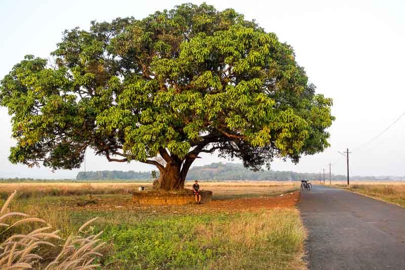Divar, Goa