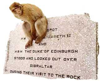 Affe auf dem Felsen
