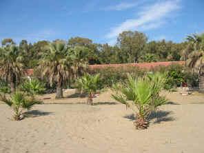 hutje op de palmenbeach