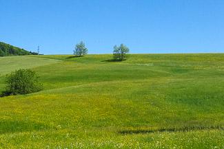 Landschaft im Jura